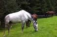 Las Agujas, Pensión de caballos